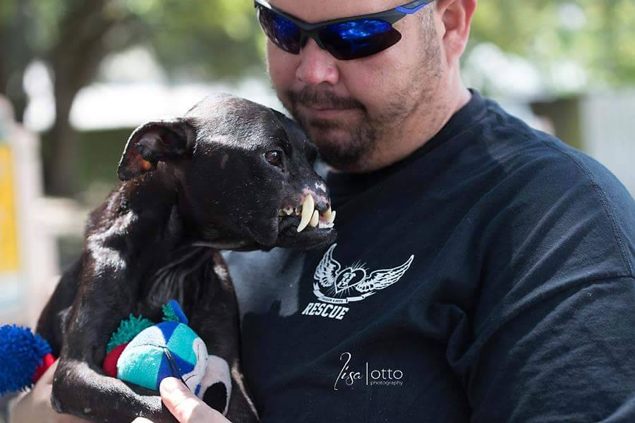 2015's 10 BEST PIT BULL STORIES