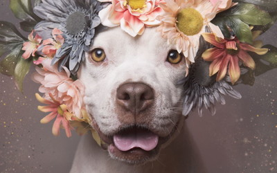 PROOF THAT PITTIES ARE BEAUTIFUL!